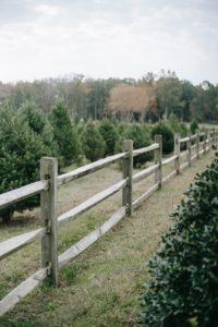 A Split-Rail Fence